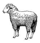 Masonic Lamb